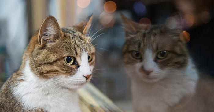 Katzenschutzverordnung beschlossen