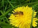 Dominoeffekt: erst die Pflanzen, dann die Insekten, dann die Vögel