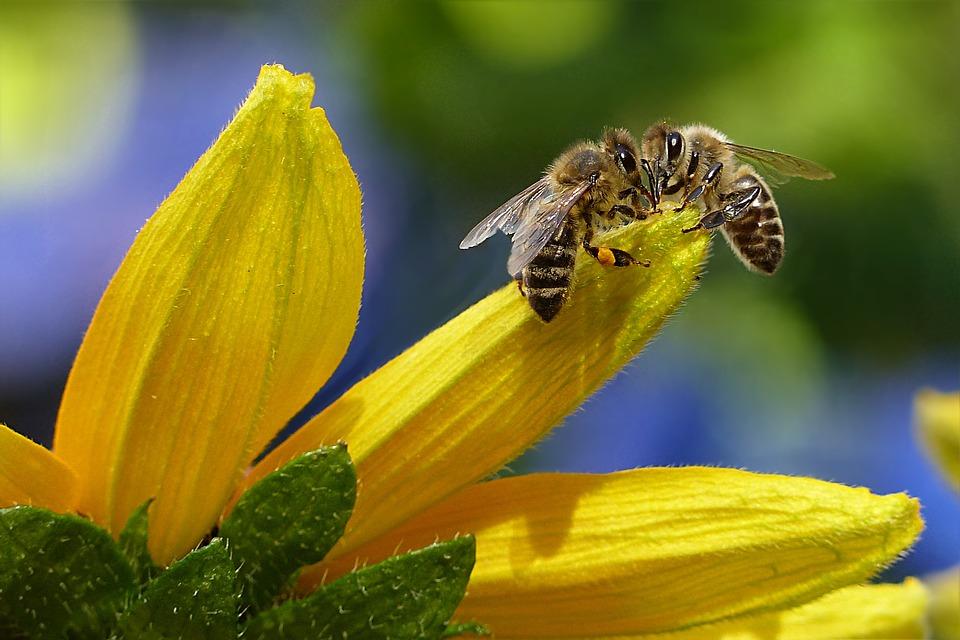 Keine Ausreden mehr – Bienenkiller müssen jetzt vom Acker!