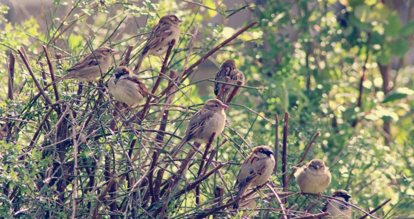 Vogelschutzhecke