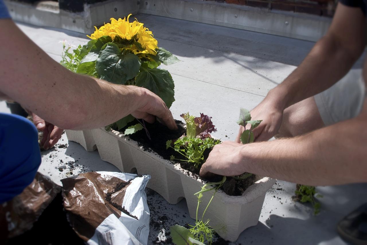 Digitaler Stammtisch: SoLaWi und Urban Gardening